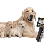 dogs' ovulation detection heat oestrous bitch mating time best method silent oestrous progesterone test when