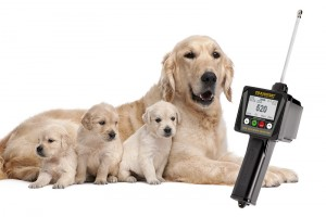 Device for dog breeders with reproductive problems